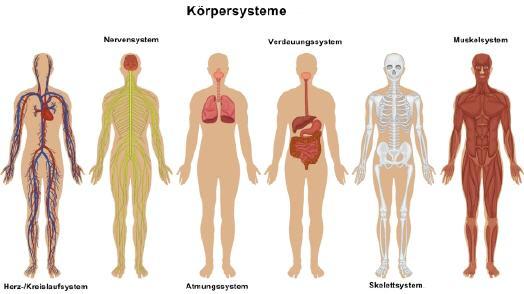 Körpersysteme